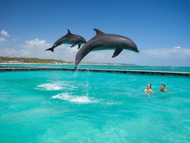 Манати Парк Дельфины