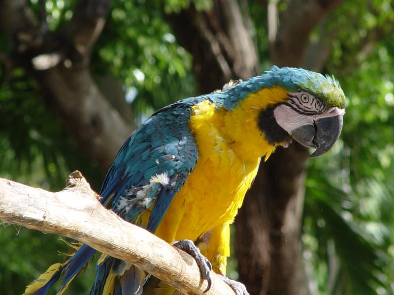Зоопарк Доминикана