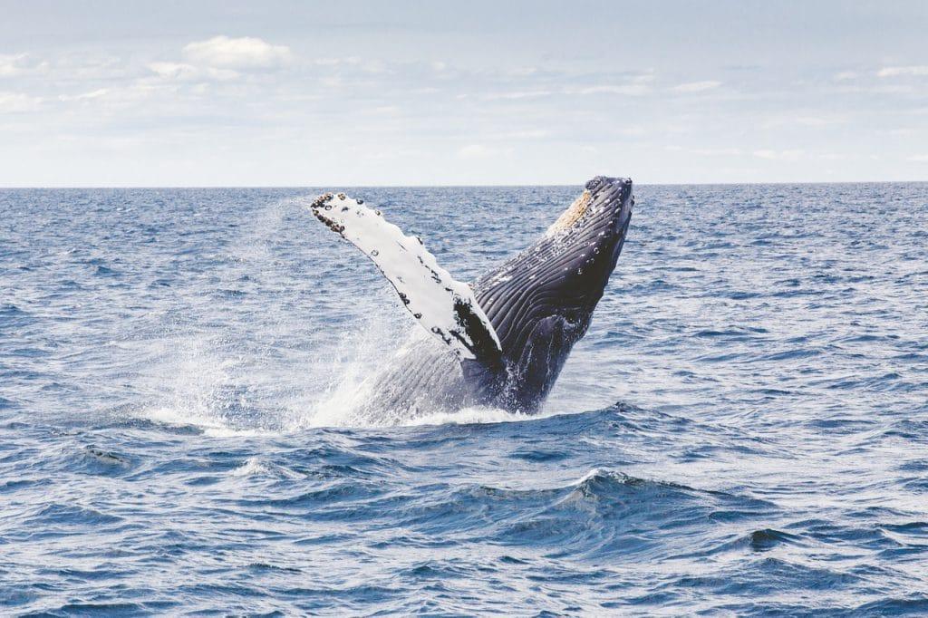 экскурсия на китов в Доминикане